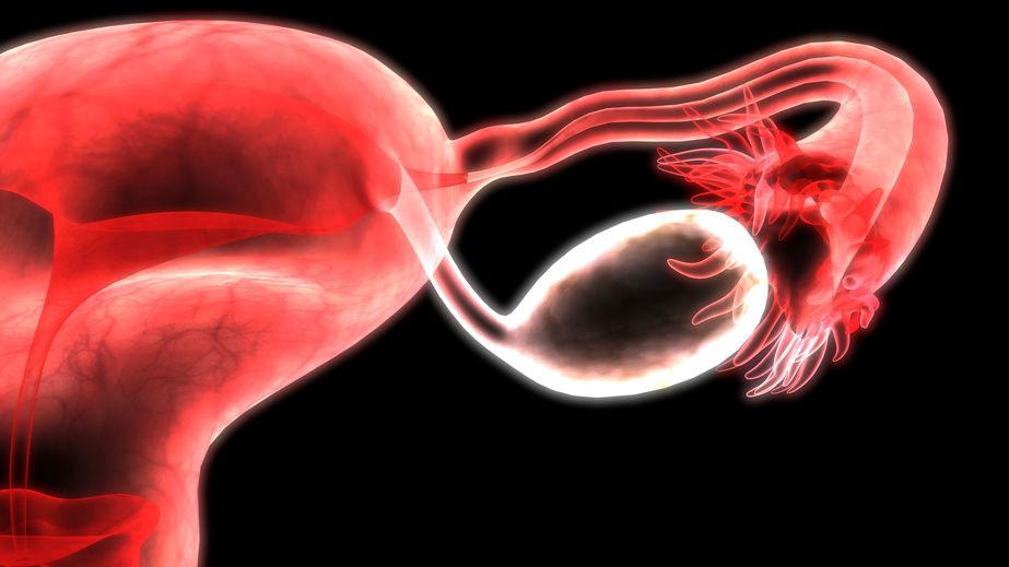 מערכת הרבייה הנקבית - דר' עינת שלום פז, טיפולי פוריות, הפריה חוץ גופית, רופאת פוריות, רופאה גניקולוגית מומלצת וטיפולי פריון