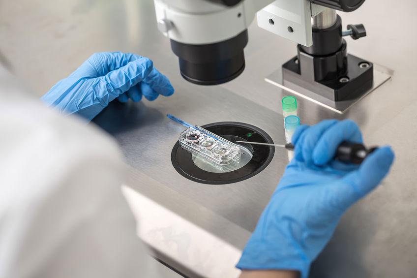 תהליך הפריה חוץ גופית - פרופ'.מ. עינת שלום פז, רופאת פוריות, אבחון וייעוץ להפרעות פוריות, טיפולי פריון וטיפולי IVF